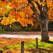 Autumn maple tree near road — Stock Photo