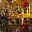 Fall forest reflections — Stock Photo #4495575