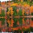 Fall forest reflections — Stock Photo
