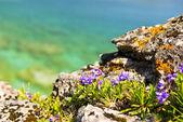 Wildflowers at shore of Georgian Bay — Stock Photo
