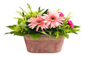 Isolated flower arrangement — Stock Photo