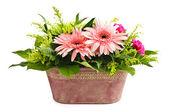 Isolated flower arrangement — Stock Photo