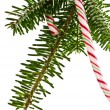 Candy cane on tree — 图库照片