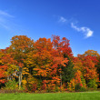 Autumn trees — Stock Photo #4518638