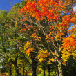 Autumn trees — Stock Photo #4518640