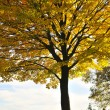Autumn trees — Stock Photo #4518668