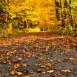 Autumn path - Stock Photo
