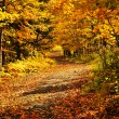 Autumn path — Stock Photo