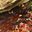 Autumn leaves in lake — Stock Photo