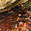 Autumn leaves in lake - Stock Photo
