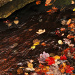Stock Photo: Autumn leaves in lake