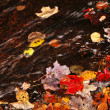 Autumn leaves in creek - Stok fotoraf