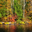 Fall forest and lake shore — Stock Photo