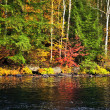 Fall forest and lake shore — Lizenzfreies Foto