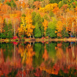 Fall forest reflections — Stock Photo #4518764