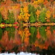 Stock Photo: Fall forest reflections