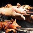 Roasted pigs - Stock Photo