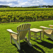 Royalty-Free Stock Photo: Chairs overlooking vineyard