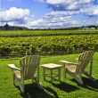 Постер, плакат: Chairs overlooking vineyard