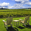 Stock Photo: Chairs overlooking vineyard