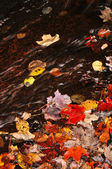 Autumn leaves in creek — Stock Photo