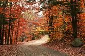 Autumn landscape with a path — Stock Photo