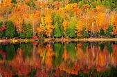 Reflexões de floresta de outono — Foto Stock
