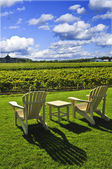 Chairs overlooking vineyard — Stock Photo