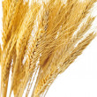 Isolated wheat ears — Stock Photo