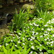 Spring flowers near creek — Stock Photo #4564556