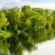 Trees reflecting in river — Stock Photo