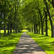 Path in green park — Stock Photo