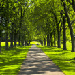 Path in green park — Stock Photo #4565345