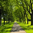Path in green park - Stock Photo