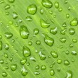 Green leaf background with raindrops - Stock Photo