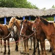 Horses gathered at beach — Stock Photo