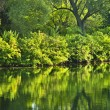 Stock Photo: Green reflections in water