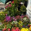 Stock Photo: Flower baskets for sale