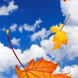 Fall maple leaves background — Stock Photo #4565690