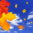 Fall maple leaves background — Stock Photo #4565691