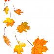 Fall maple leaves background — Stock Photo #4565699