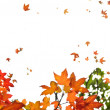 Fall maple leaves background — Stock Photo #4565702