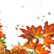 Fall maple leaves background — Stock Photo #4565705