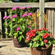 Flower pots on house deck — Stock Photo #4565766