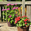 Flower pots on house deck - Stock Photo