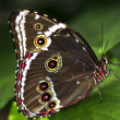 Stock Photo: Butterfly on plant