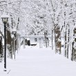 Lane in winter park — Stock Photo #4566343