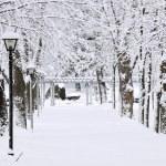 Lane in winter park — Stock Photo #4566343