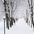 Lane in winter park — Stock Photo #4566358
