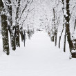 Lane in winter park — Foto Stock